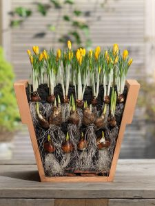 Container Gardening with Layered Bulbs w/ Catherine Crowder @ Hirsch Center at Revolution Mill | Greensboro | North Carolina | United States
